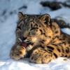 Salzburg Zoo is open 365 days a year.