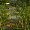 Naturbad als Ökosystem: In Gargazon schwimmt man umgeben von Seerosen.