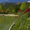 Die Reinigung des Wassers erfolgt durch heimische Sumpf- und Wasserpflanzen, die am Beckenrand positioniert sind.