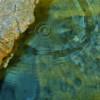 Baden verfügt über 15 gefasste Quellen, aus denen Schwefel in seiner vollen Stärke und Reinheit genutzt werden kann.