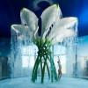 Callablüten-Dusche