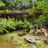 Der Mangroven-Wald ist Teil des Indoor-Regenwaldes