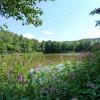 Der Waizenreuther Kiesweiher ist ca. 1 Kilometer von Weidenberg entfernt inmitten fast unberührter Natur