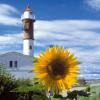 Der Leuchtturm von Timmendorf wurde 1871 in Betrieb genommen und ist bis heute für die zunehmenden Schiffsbewegungen von großer Wichtigkeit.
