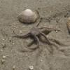 Die Sandstrände von St. Peter-Ording sind ein Paradies für Naturfreunde und Meereserkunder.
