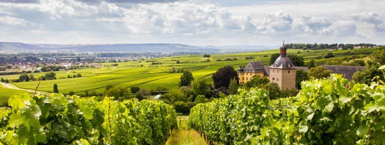 Idyllic landscapes: the wine region of Rheingau.