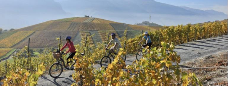 Radfahren in den Weinbergen von Miege